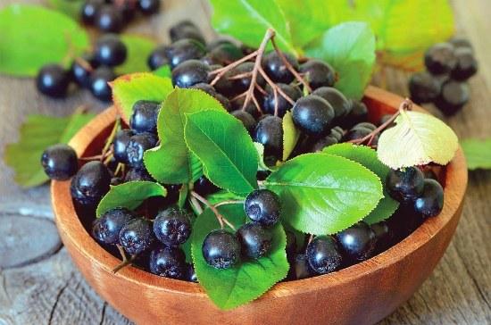 Польза черноплодной рябины для организма
