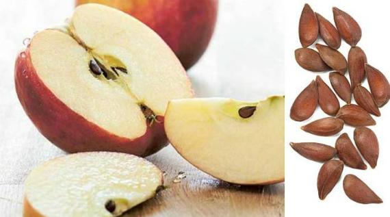 Польза яблочной кожуры и семечек