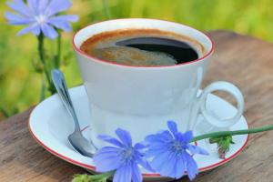 Цикорий растворимый польза и вред для здоровья, для мужчин, для женщин Сколько можно пить в день