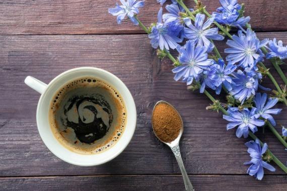 Может ли цикорий заменить кофе