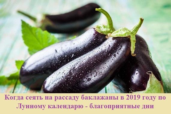 Когда сеять баклажаны на рассаду по Лунному календарю в 2019 году