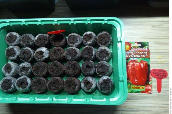 Как вырастить рассаду перцев в таблетках