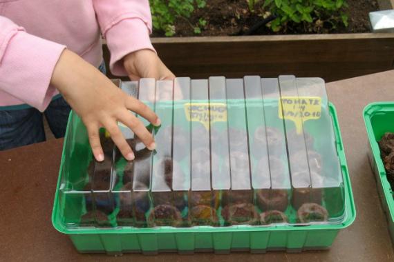 Выбор емкости для посева