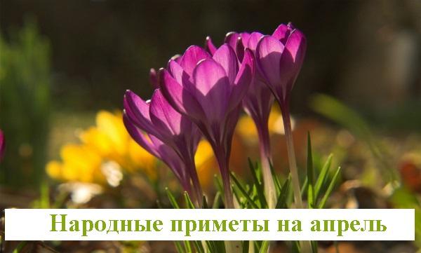 Народные приметы садовода на апрель