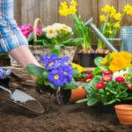 Лунный посевной календарь на апрель 2019 года садовода и огородника