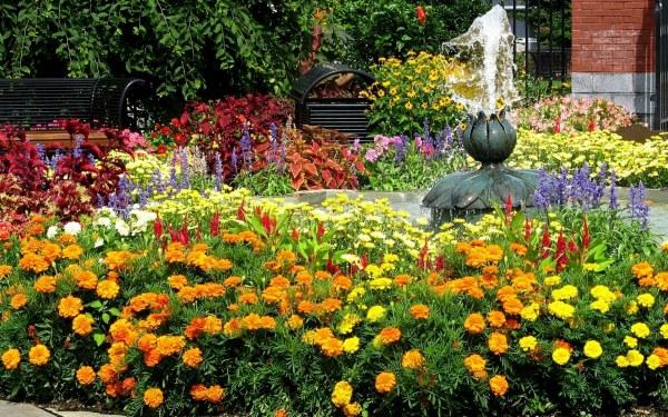 Чем подкормить для обильного цветения