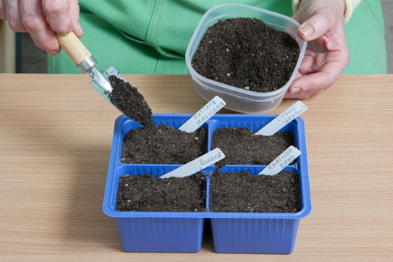 Подготовка грунта и семян
