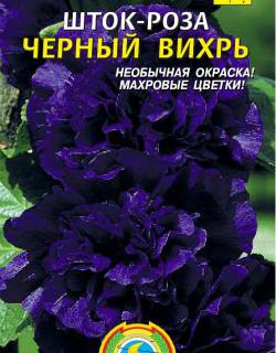 Шток роза черный вихрь