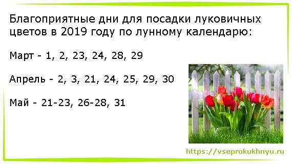 Посадка тюльпанов по Лунному календарю в 2019 году