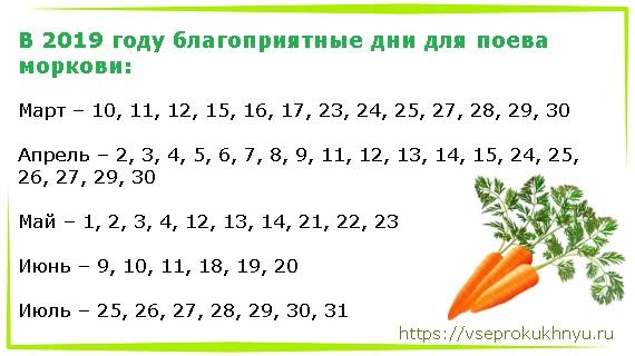 Благоприятные дни для посева моркови в 2019 году