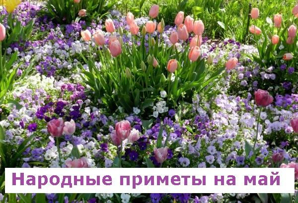 Народные приметы садовода на май