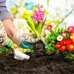 Лунный посевной календарь на май 2020 года садовода и огородника