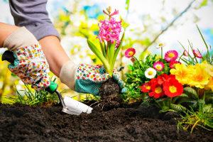 Лунный посевной календарь на май 2021 года садовода и огородника Таблица Благоприятные дни для посадки