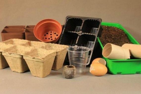 Выбор грунта и посадочных емкостей