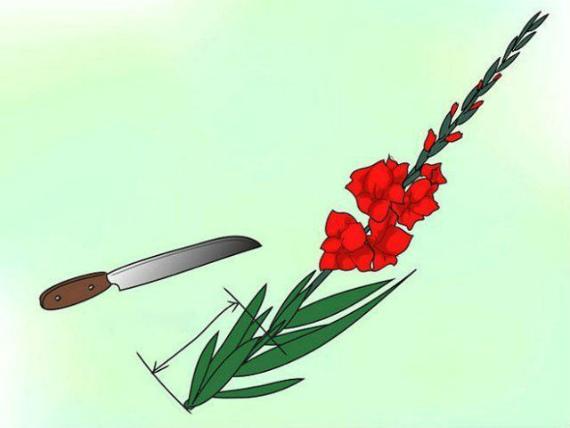 Правильная срезка цветов