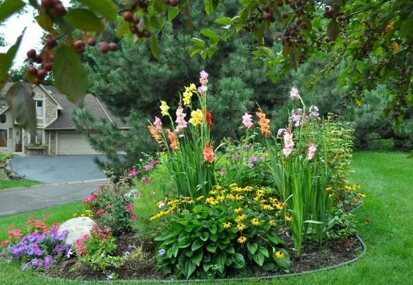 С какими цветами гладиолусы сочетаются на клумбе