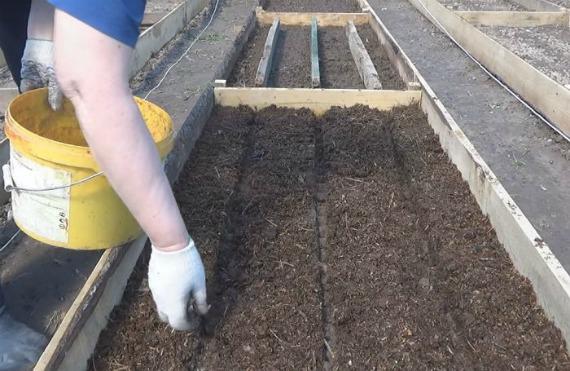 Подготовительные работы перед посевом моркови