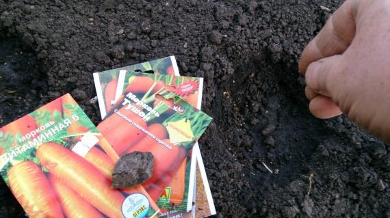 Как правильно посеять морковь весной разными способами