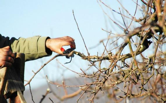 Когда проводить обрезку яблонь — весенние сроки