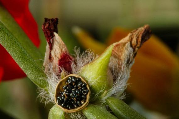 Когда и как собирать семена