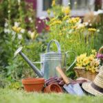 Лунный посевной календарь на июнь 2021 года садовода и огородника