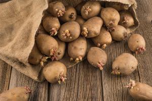 Обработка картофеля перед посадкой - чем{q} когда{q} как{q}