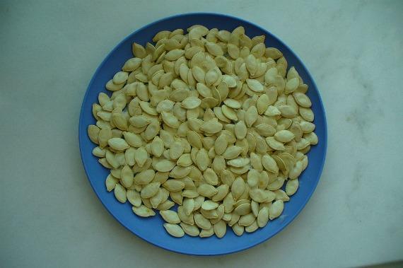 Как правильно собирать и заготовить свои семена кабачков