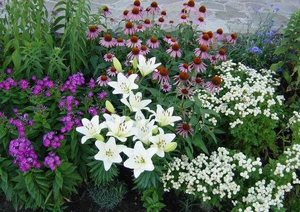 Сочетание лилий с другими цветами