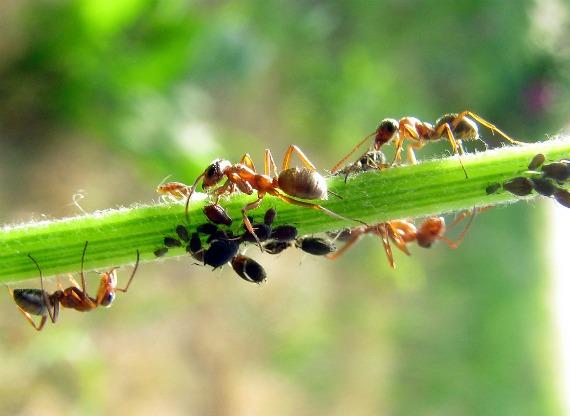 Стоит ли бороться с муравьями – польза и вред от насекомых