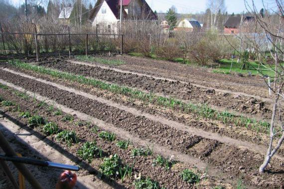Подготовительные работы перед посевом