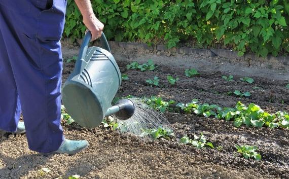 Работы огородников в июне