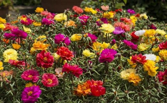 Подкормки для обильного цветения