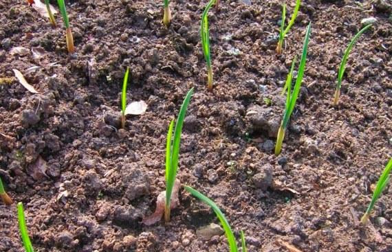 Учет растений предшественников