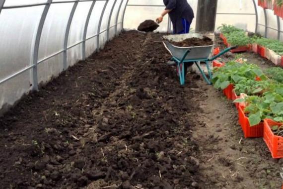 Подготовка почвы к посадке огурцов в теплице