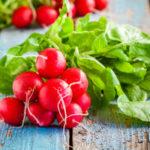 Редиска: польза и вред для здоровья