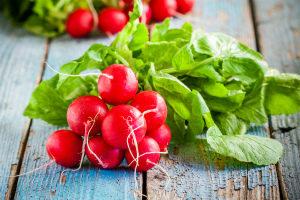 Редиска: польза и вред для здоровья организма, калорийность Фото Видео