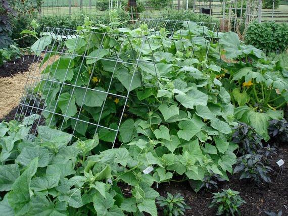 Полезные советы садоводов