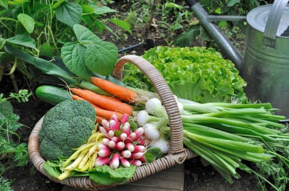 Работы огородников в июле