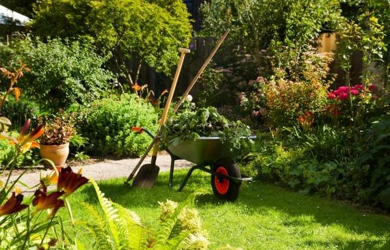 Работы садоводов в июле