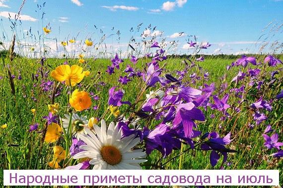 Народные приметы садовода на июль