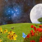 Лунный календарь на июль 2020 года садовода и огородника