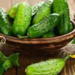 Огурец — польза и вред для здоровья человека