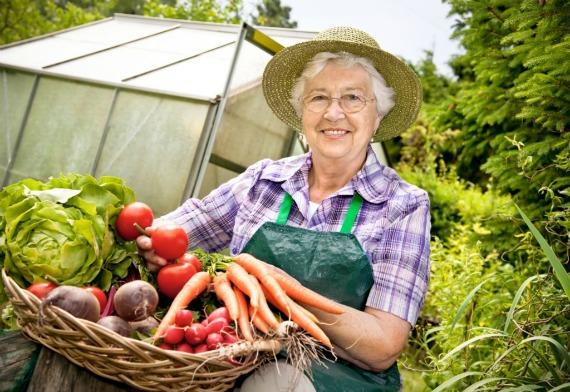 Уборка урожая овощей в августе