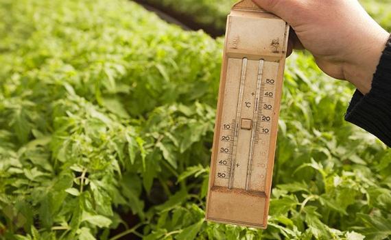 Нарушение микроклимата в теплице