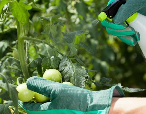 Подкормка томатов борной кислотой – рецепты, пропорции