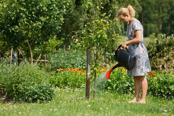 Работы садоводов в августе