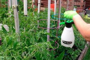 Как обработать помидоры борной кислотой