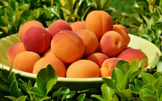 Советы по консервированию абрикосов в сиропе