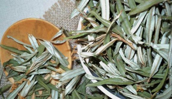 Листья облепихи: полезные свойства и применение