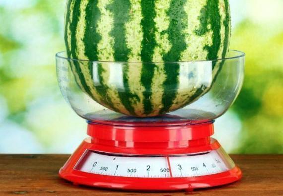 Рекомендуемый вес и размер арбуза